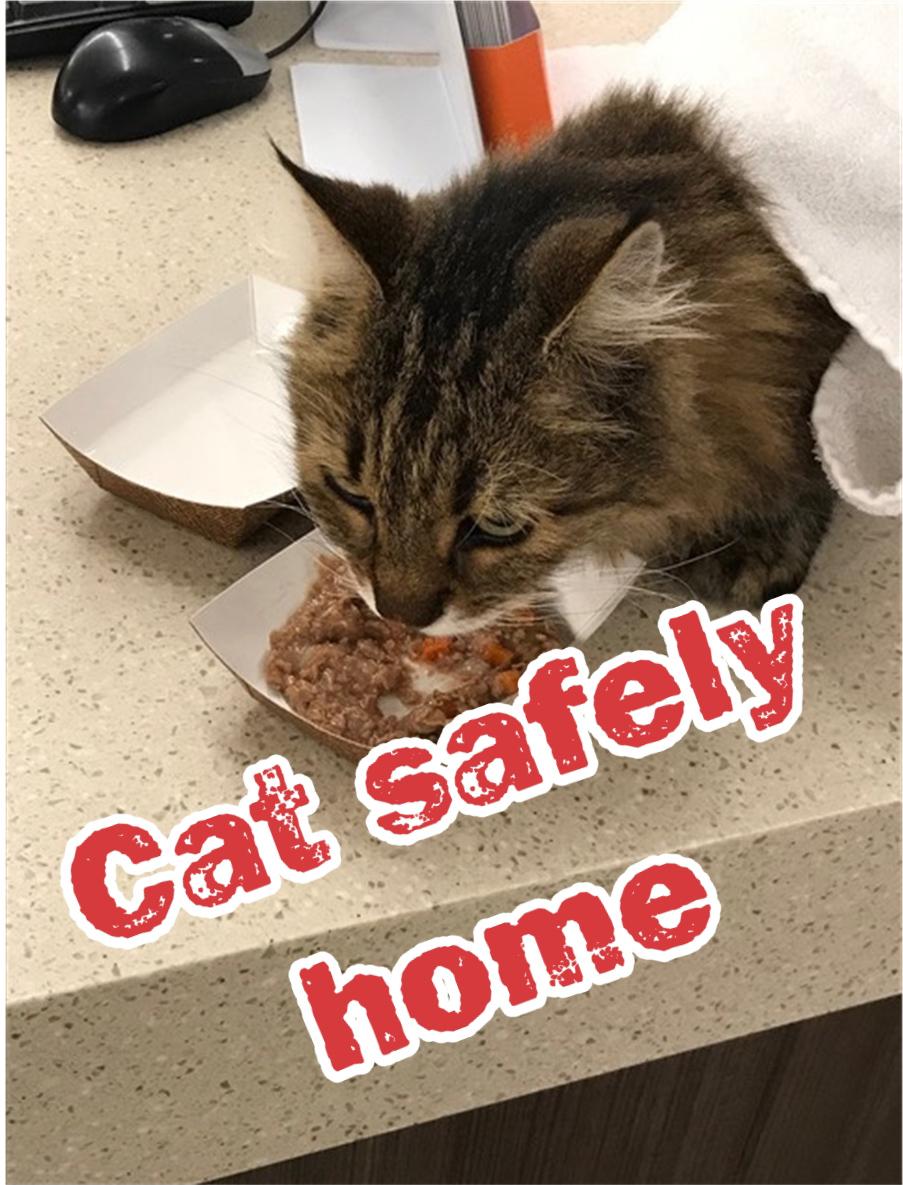 Cat safely home.jpg