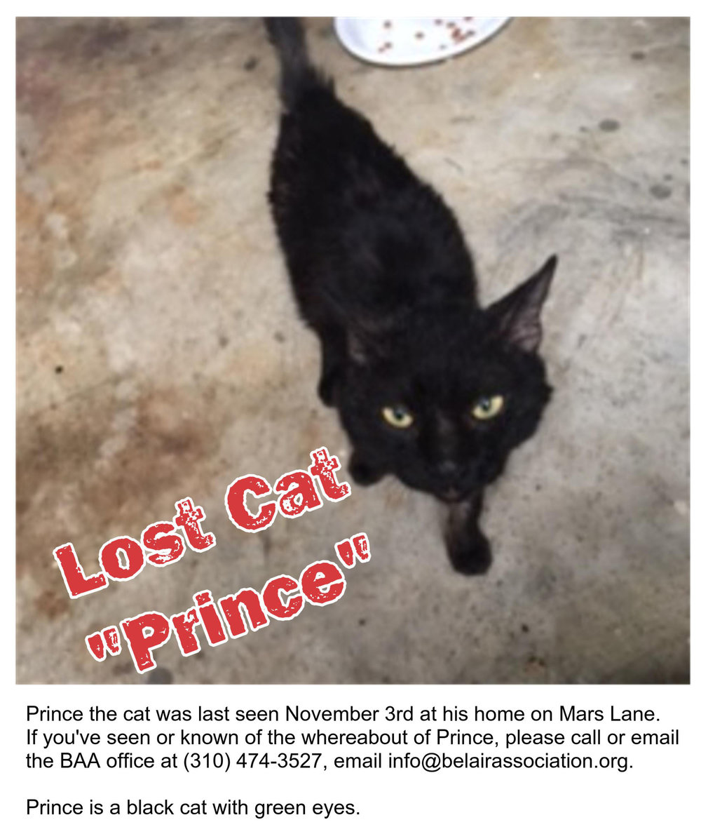 Prince the lost cat.jpg