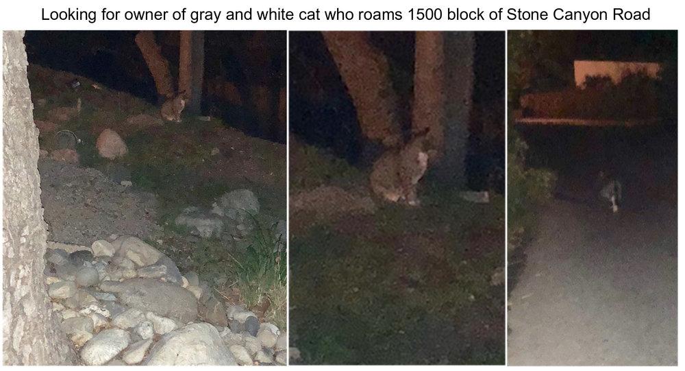 Pets - cat.jpg