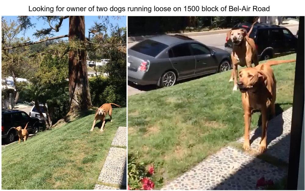 Pets dogs.jpg