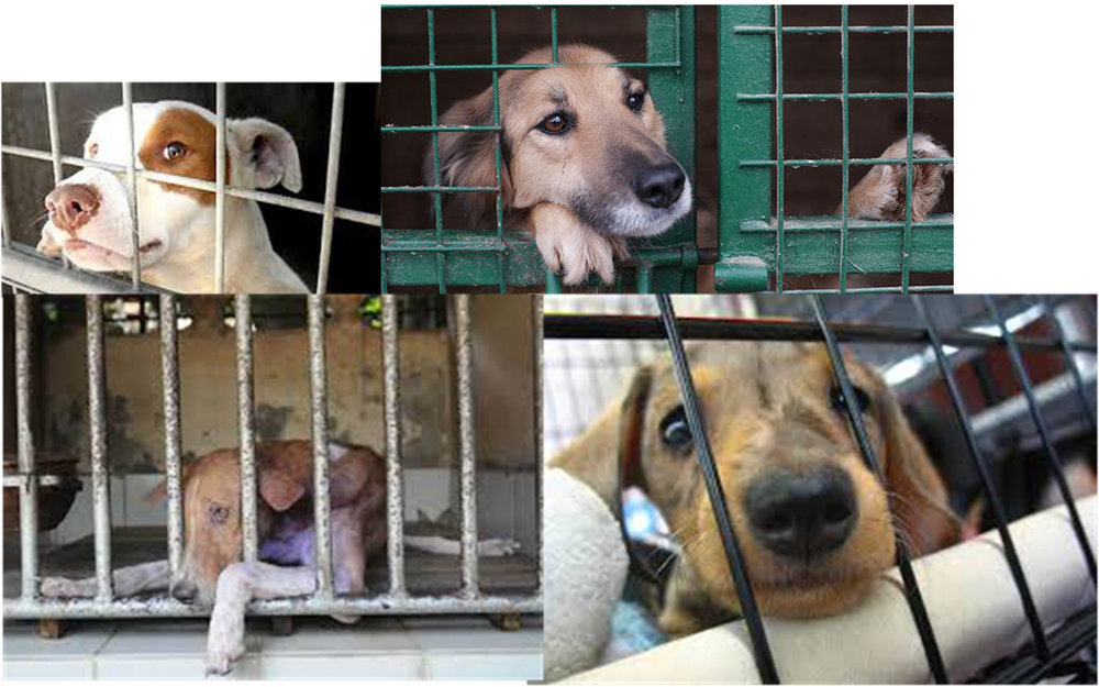 Dogs in shelters images.jpg