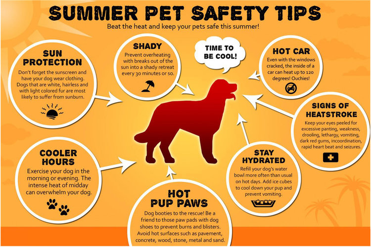 Image result for hot weather safety pets