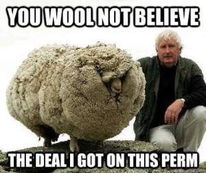 funny-sheep-quotes003.jpg