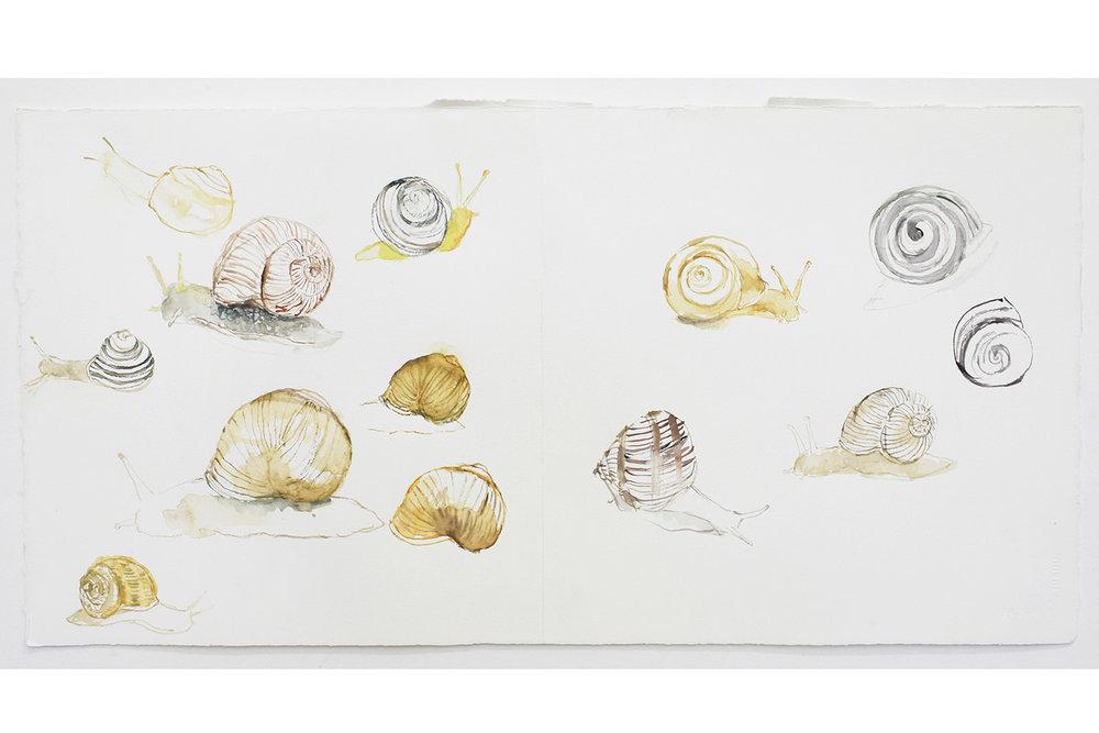 Snail Study.jpg