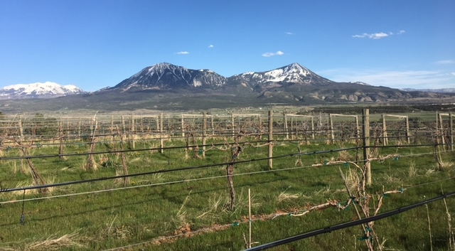 Our vineyard- The Storm Cellar Winery- on Sunshine Mesa, Hotchkiss, CO
