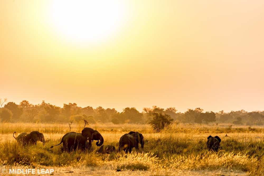 mwaleshi-north-luangwa-walking-safari-elephants-sunset.jpg