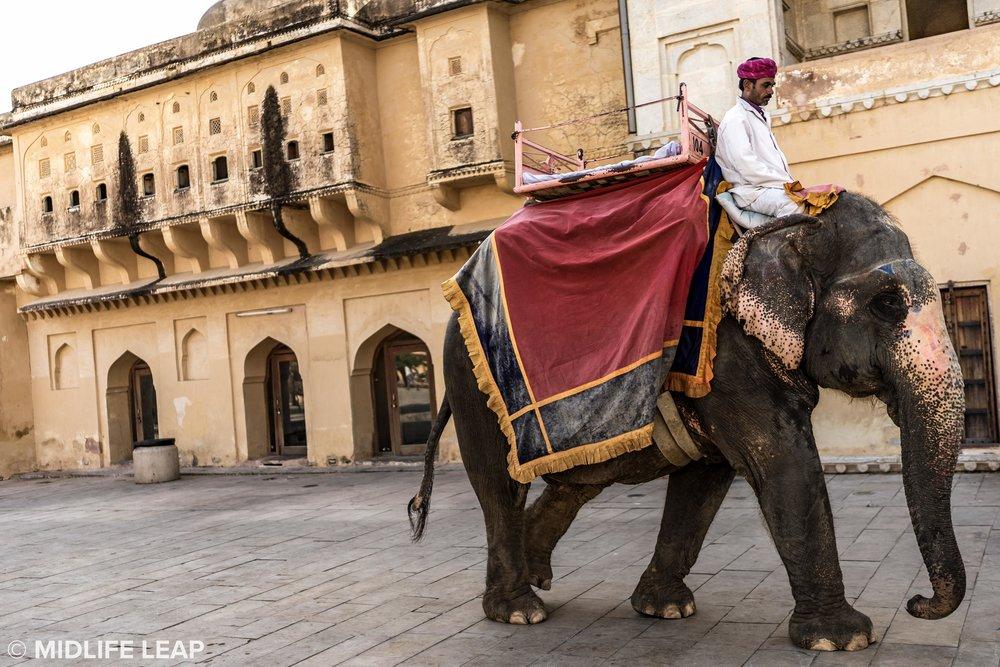 elephants-at-amber-fort-jaipur-rajasthan.jpg