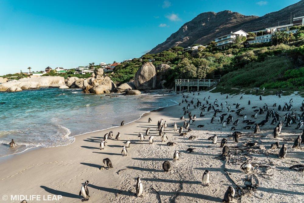 boulder-beach-simons-town-penguins