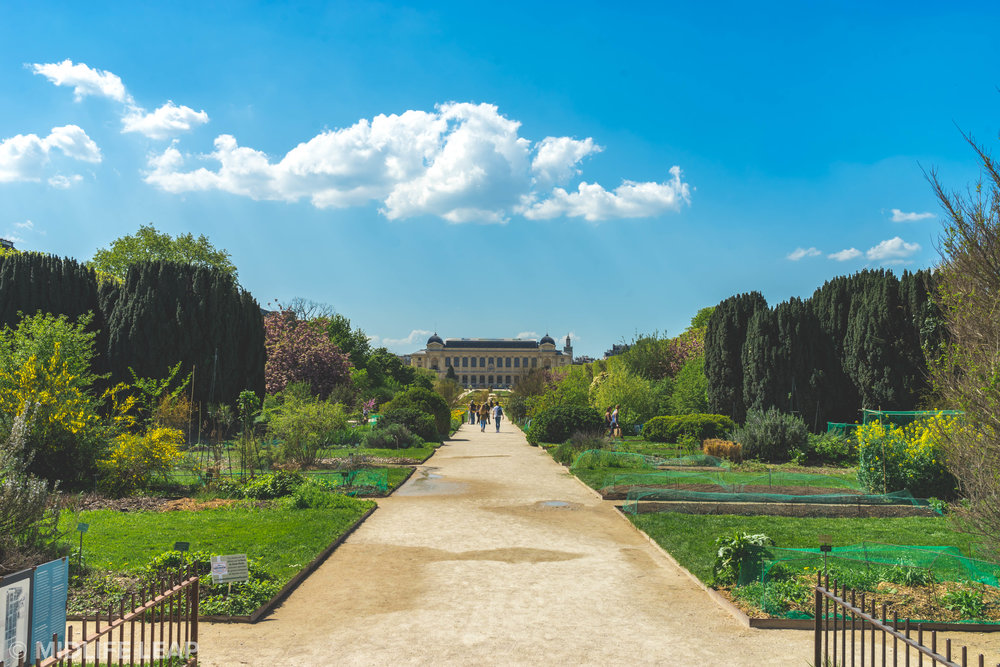 jardin-des-plantes-the-best-walks-through-paris