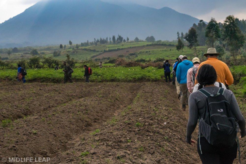 how-hard-is-the-hike-on-a-gorilla-trek-rwanda