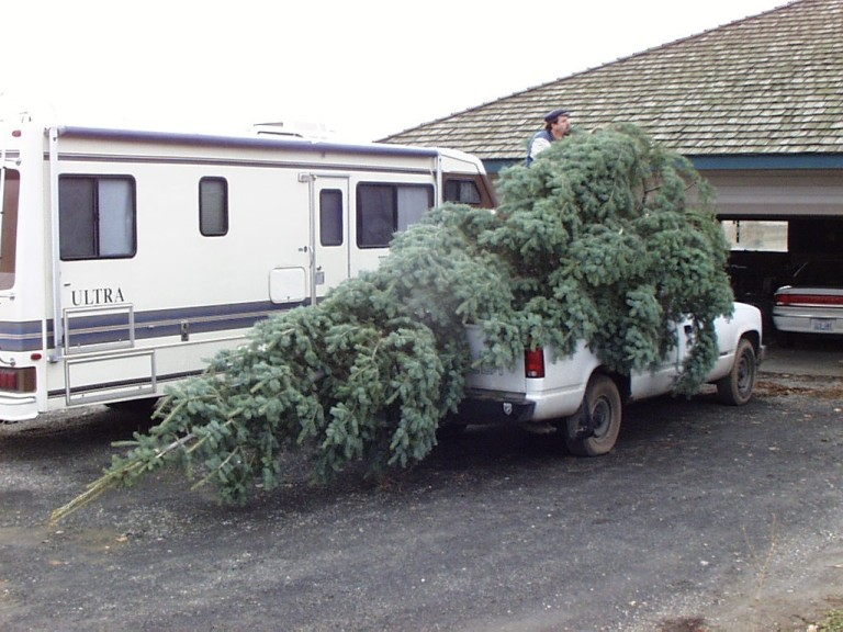 Our friend Garry loaned us his pick-up to haul the tree.