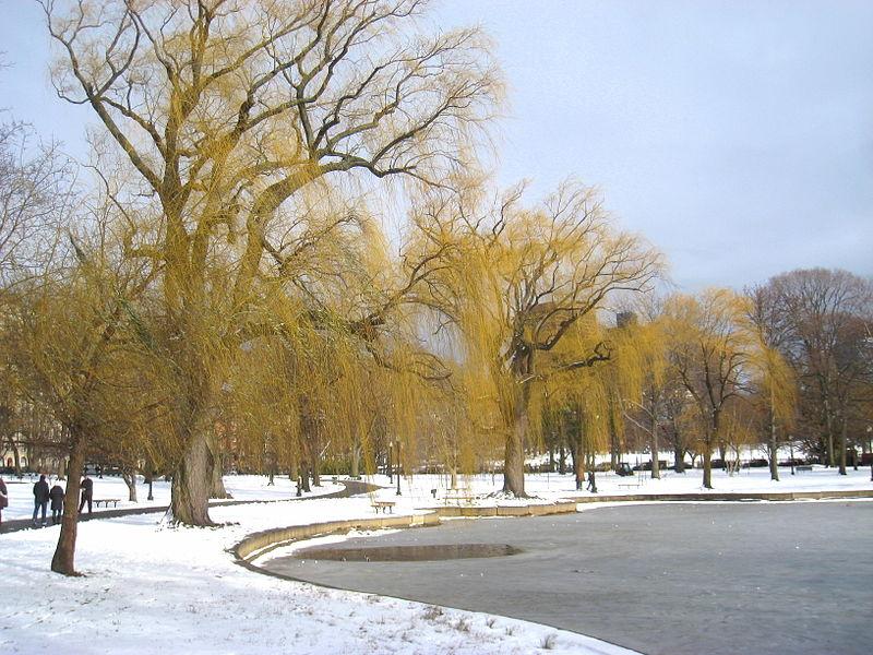 800px-Winter_in_Boston_Public_Garden_-_IMG_8332.JPG