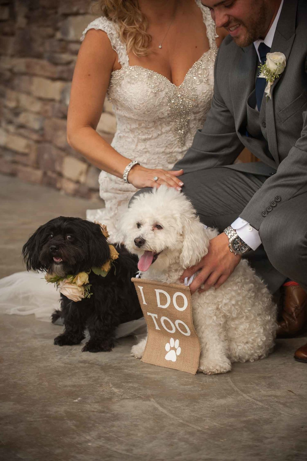 Meghan and Taylor's furry friends were not forgotten on the special day. Photo:  Jerrod Brown