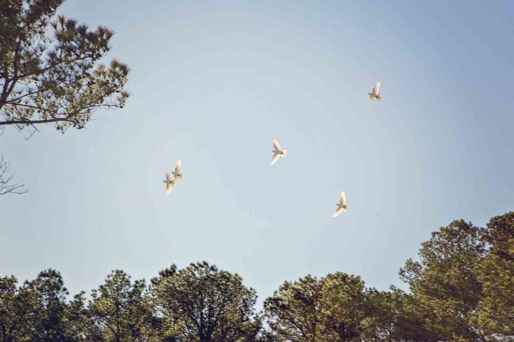 16_Doves.jpg