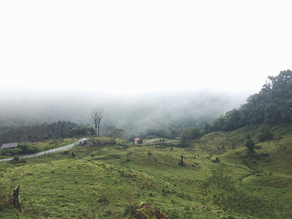 Into the cloud forest, up against Volcan Baru.