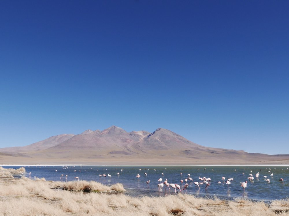 Andean Flamingos poking around a freezing Bolivian laguna. Whatever keeps those pink flapper toes warm, we want it.