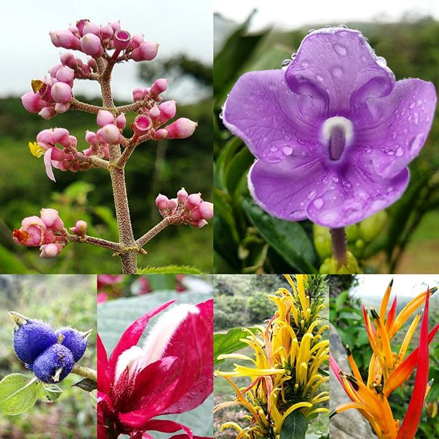 So much life and beauty existing together, like a welcoming parade of color.  #fincacalma #costarica #puravida