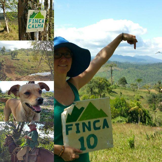 Come visit soon, the calm life is calling.  #fincacalma #vidacalmawellness #puravida #costarica FincaCalma.com