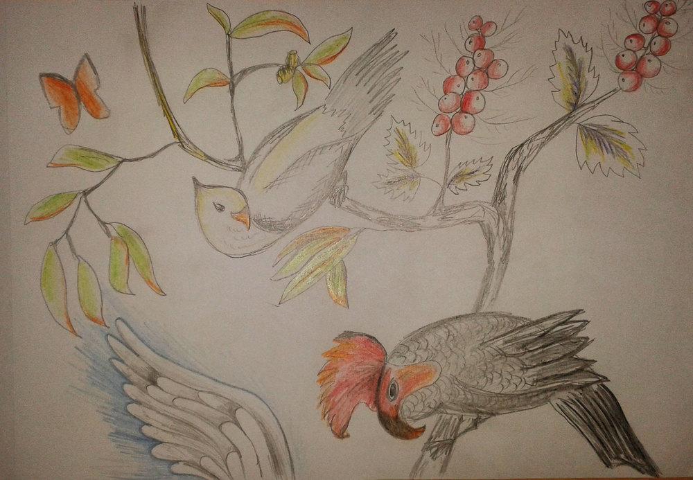 Exotic Birdos - Freehand Illustration by Whitney Edwards.jpg