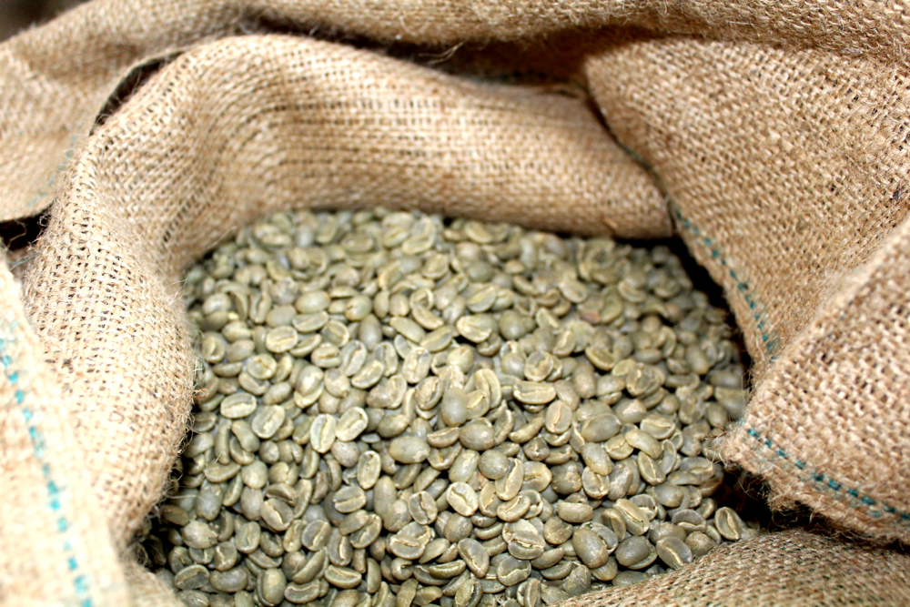Green Kona Coffee Beans
