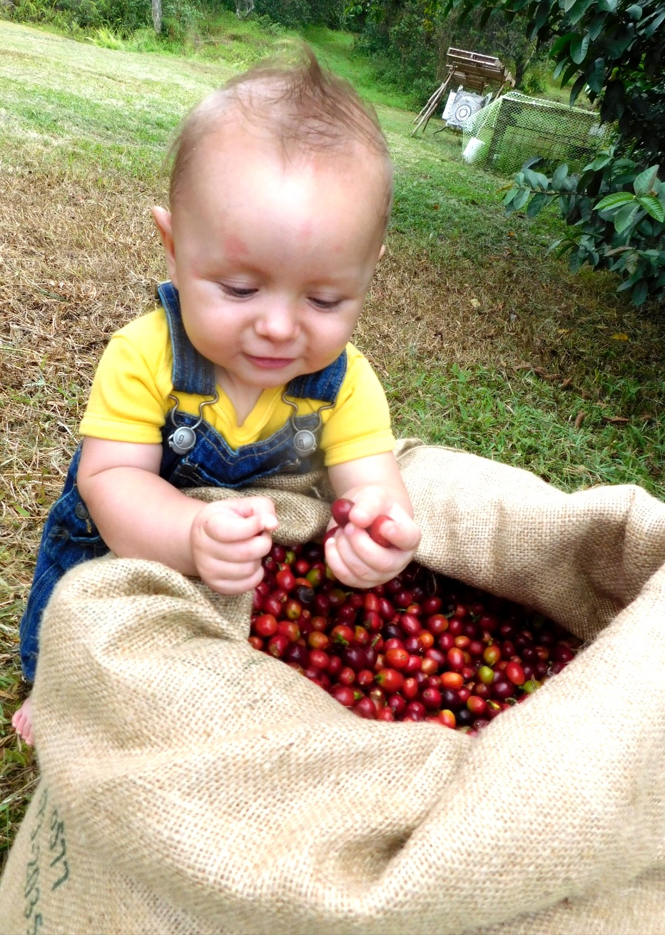 Our cutest coffee cherry inspector. PHOTO: Cynthia Crabtree