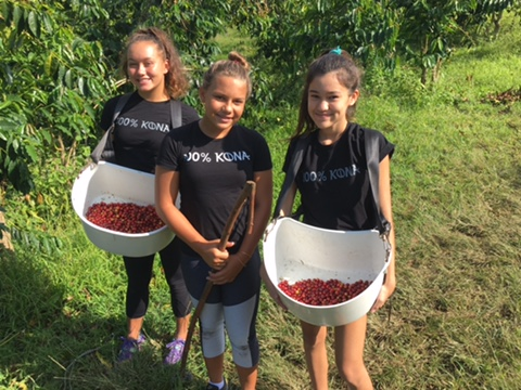 Our interns from Innovations Charter School picking coffee. PHOTO: Malia Bolton