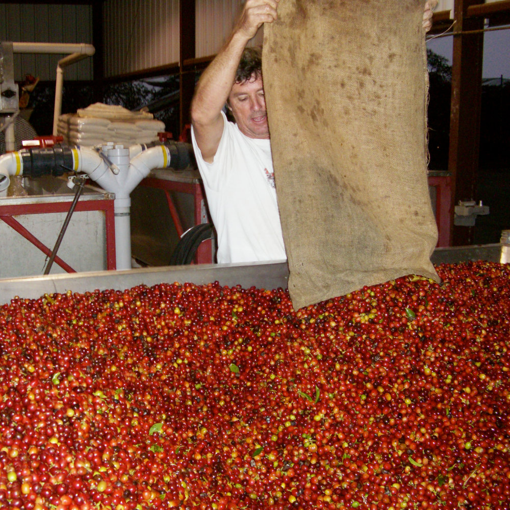 2006 - We started our own wet and dry mill – now truly becoming a farm-to-cup operation.