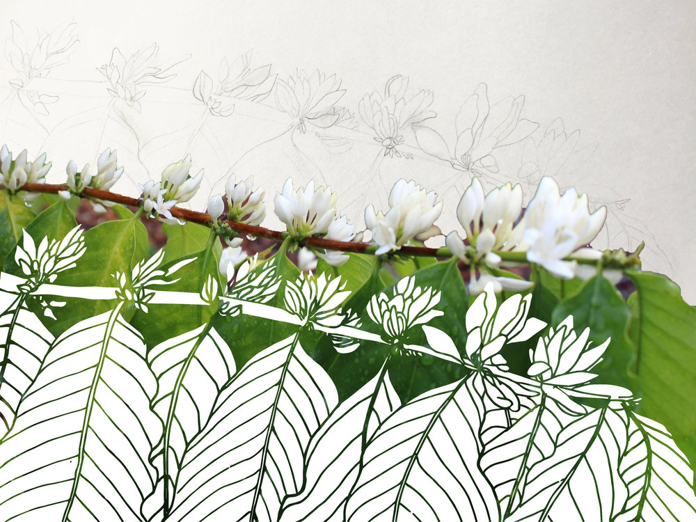 Starting with photos of the farm, sketches were hand drawn, then digitized, and compiled into a coffee print. ART: Dayva Keolanui