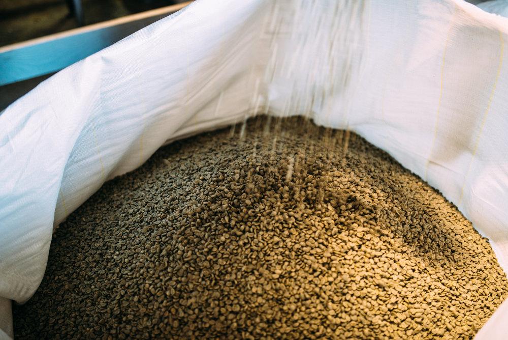 Green Coffee Beans_KonaCoffee&TeaCompany-6.jpg