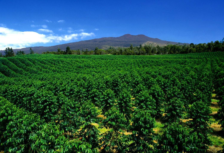 Farm — Kona Coffee and Tea Company Kona Coffee Farms Map Locations on