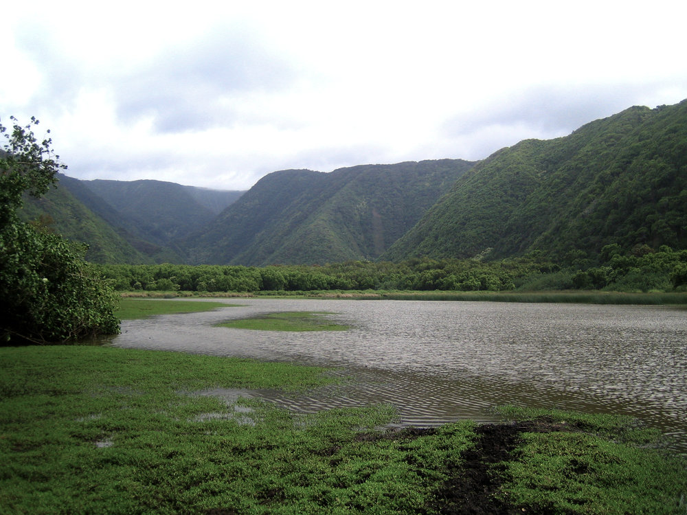 View from the floor of Pololu Valley looking towards Kapaloa Falls. PHOTO: Dayva Keolanui