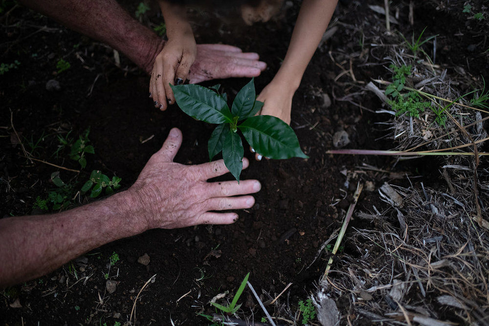 The Bolton family planting a coffee plant on our farm.  PHOTO: Blake Wisz