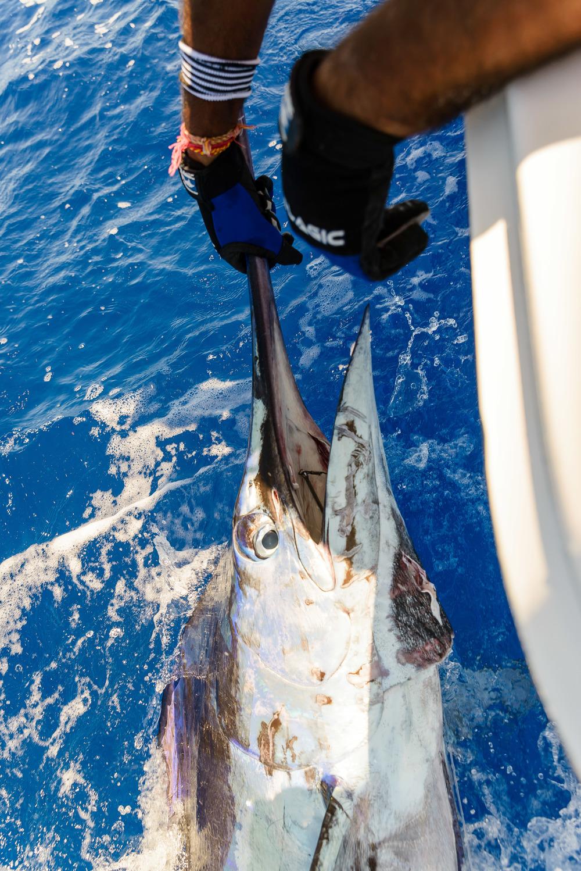 Mru Billfish Release - Day2-58.jpg