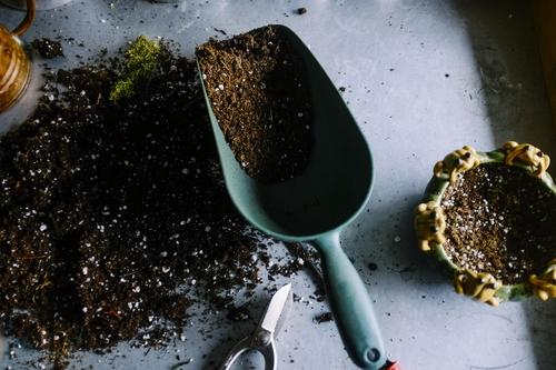soil, gardening, plants