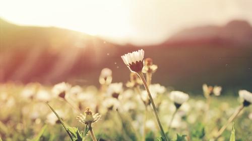 flowers, spring, pollen