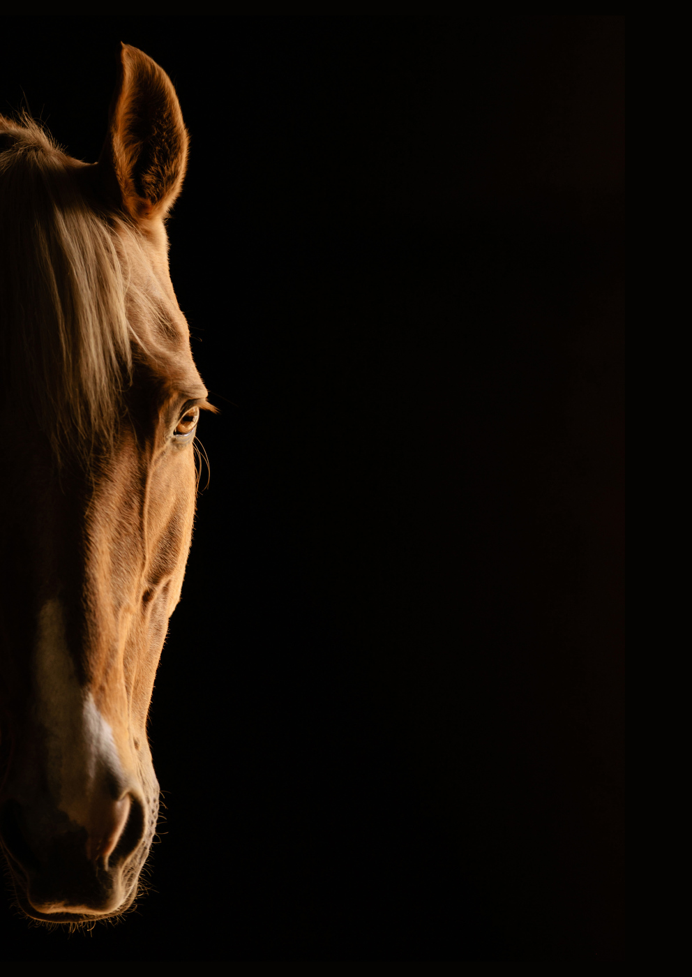 Equestrian Lifestyle Photographer