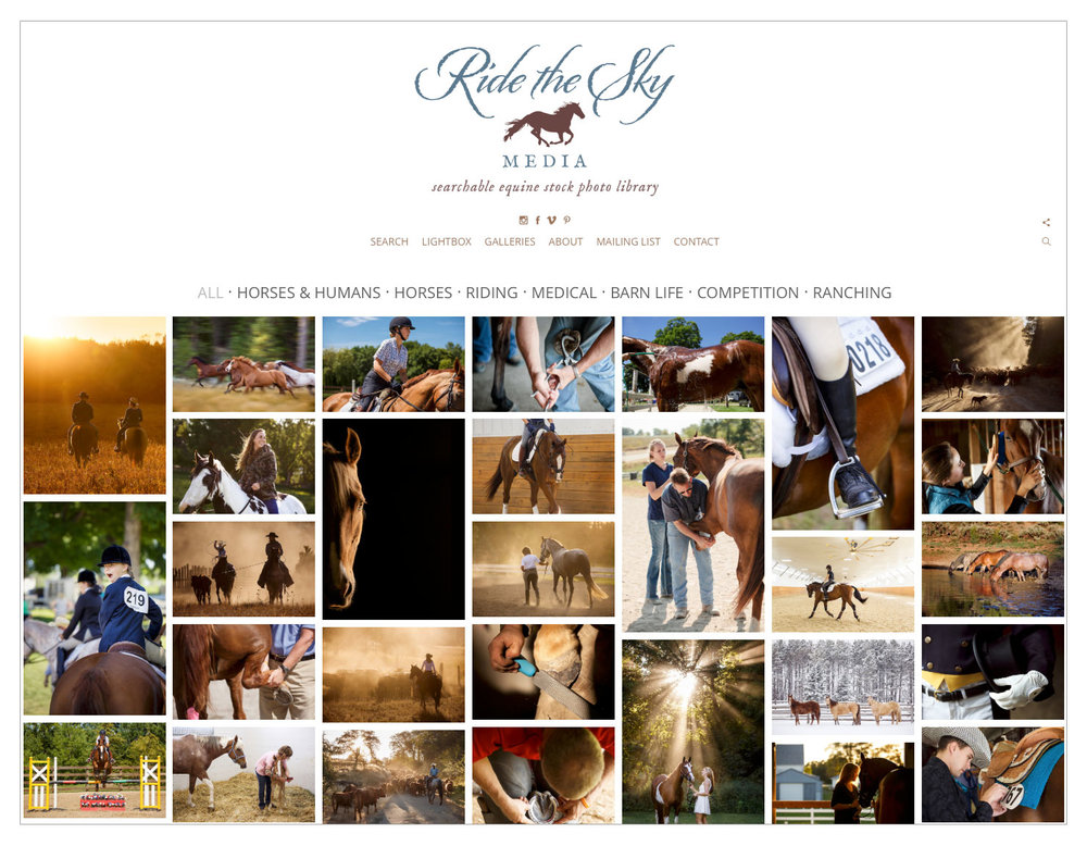 Equine Stock Photo Library