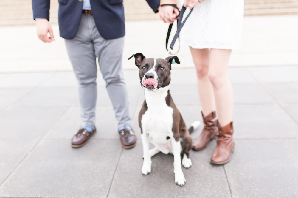 Engagement photos with dog | DC Dog Photographer | Megan Rei Photography