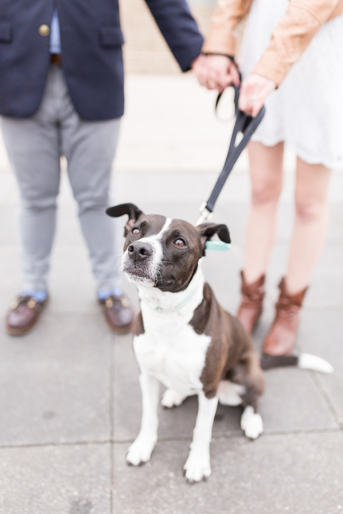 Cute dog during DC engagement session | Washington DC Dog Photographer