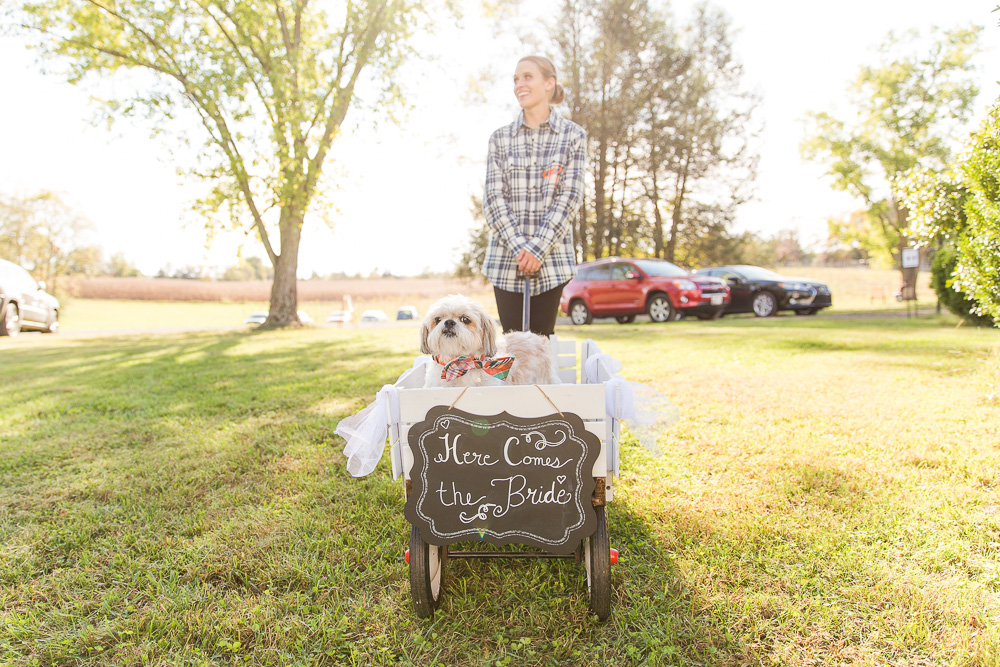 Wedding dog in his wagon