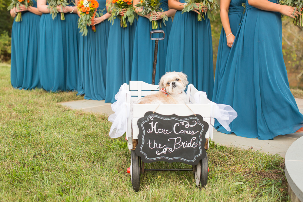 Wedding dog, Cody, watching the bride walk down the aisle | Culpeper Wedding Photos