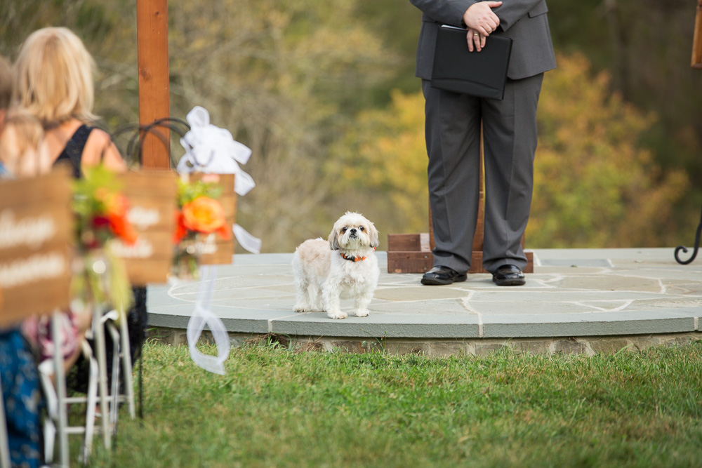 Wedding dog after the ceremony | Outdoor wedding in Culpeper, Virginia