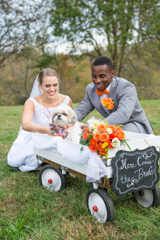 "Cute wedding dog in a wagon with ""Here comes the bride"" sign"