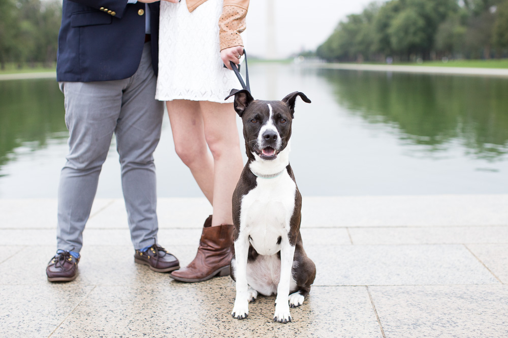 Happy dog during engagement photos | Northern Virginia Pet Photographer | Megan Rei Photography