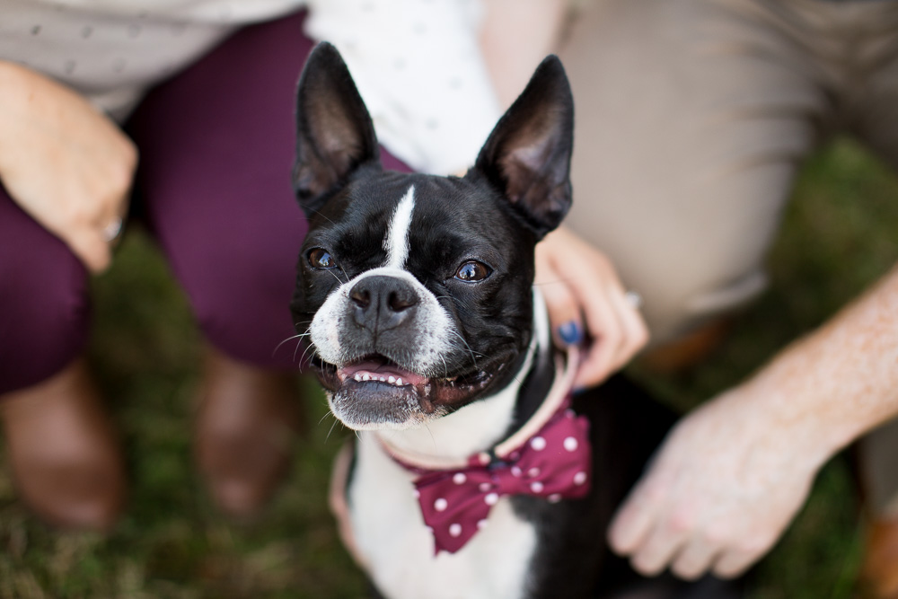 Smiling Boston Terrier | Engagement Dog Photographer in Bealeton, Virginia | Megan Rei Photography