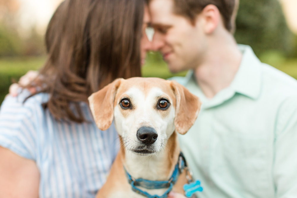 Cute dog during engagement photos in Warrenton, Virginia | Warrenton Virginia Dog Photographer