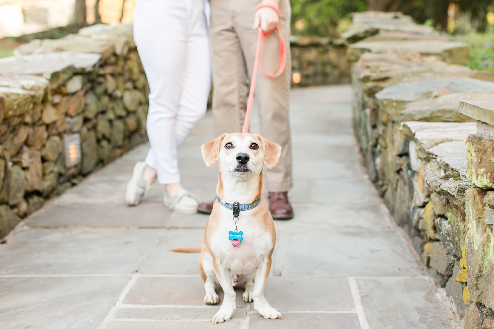 Cute dog sitting patiently and waiting for treats during an engagement photo shoot | Warrenton, Virginia Engagement Photographer