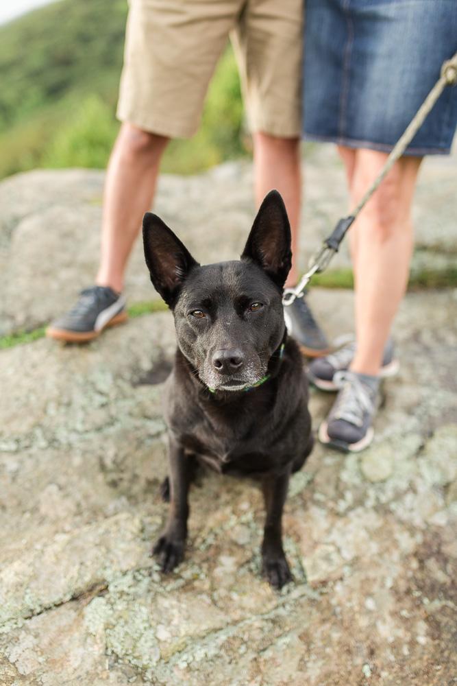 Rescue dog with hiking at Shenandoah National Park | Luray Wedding Photographer