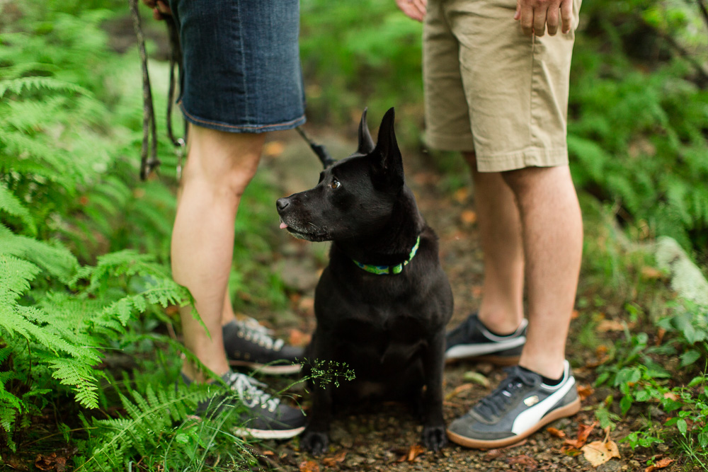Dog photography along the trail in Shenandoah National Park