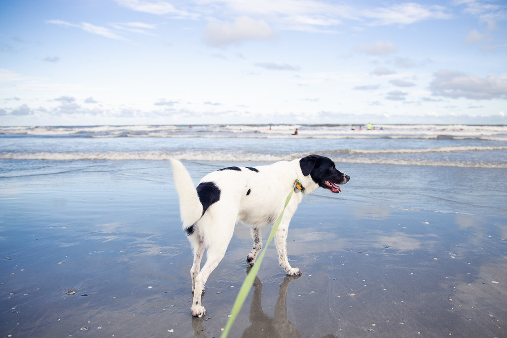 beach-dog-photographer-1.jpg